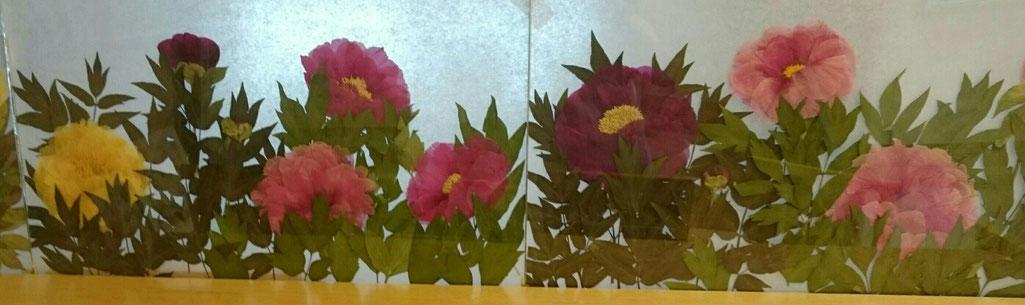 押し花 ボタンの花