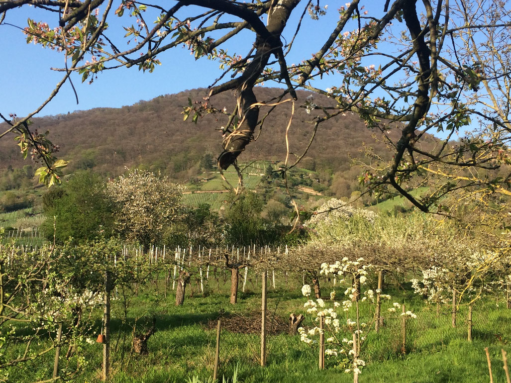 Frühling im Augustenbühl