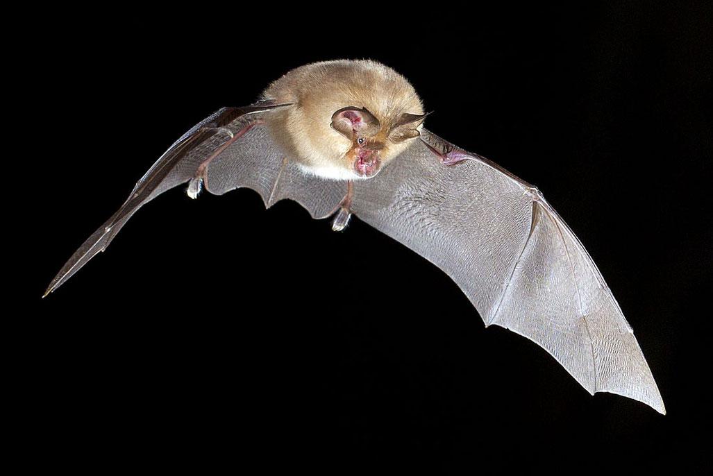 Am Haus wollen wir weitere Quartiere für Fledermäuse - unsere Kobolde der Nacht - schaffen. © Christoph Robiller / naturlichter.de