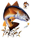 Tee-shirt pêche des gros poissons