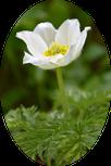 fleur de montagne - appartement anemone