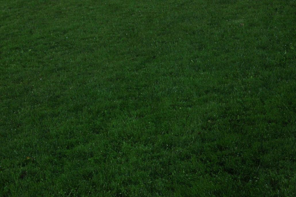 Der Sechzehner nach dem Regenguss ! Aber der Schiedsrichter war selbstbewusst. Foto: F.Trost