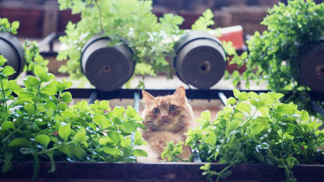 ... y me gustaría ser un gato.