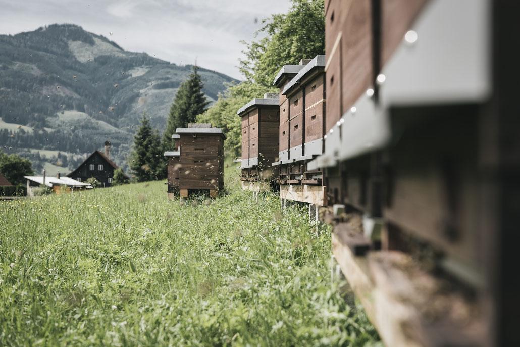 Bergbienen Imkerei