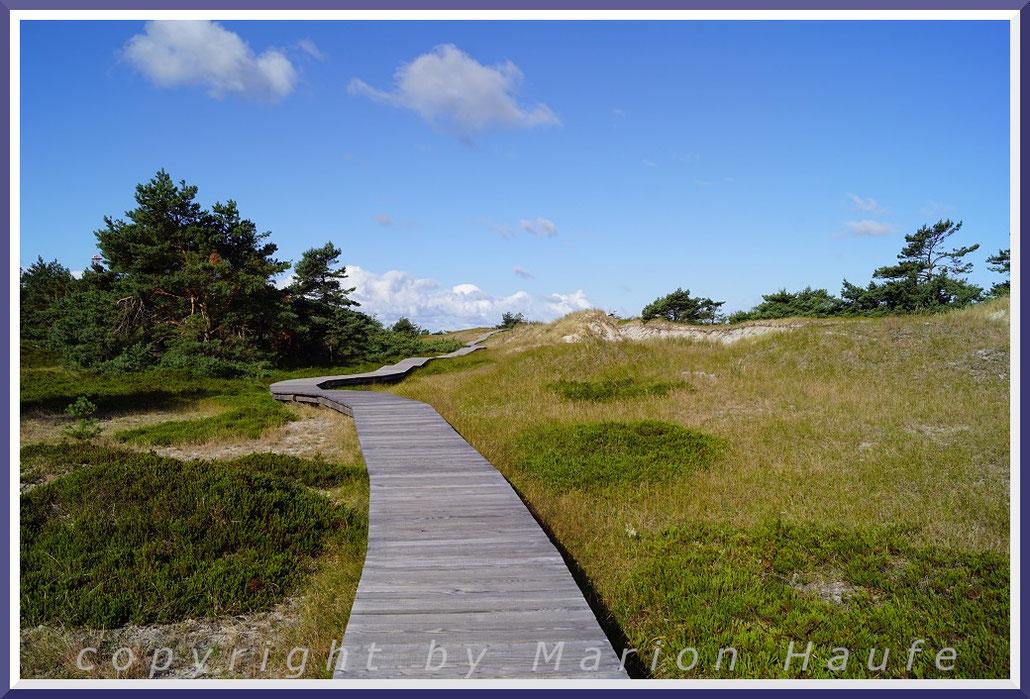Dünenlandschaft am Rundwanderweg Darßer Ort.