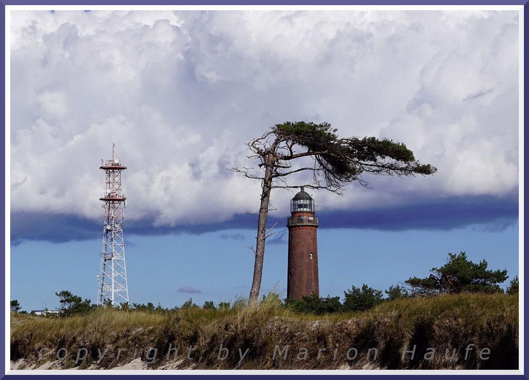 Windflüchter in der Nähe des Leuchtturms am Darßer Ort.