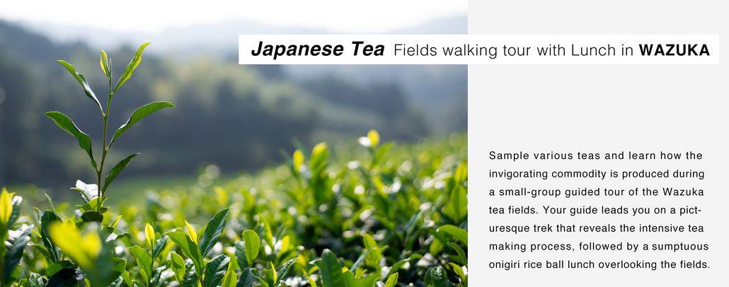 Japanese tea fields walking tour with lunch in wazuka