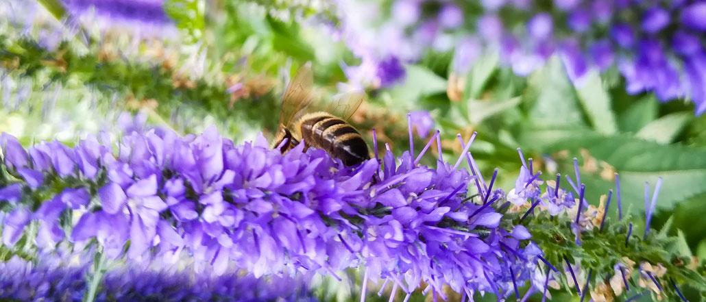 Permakultur - Traum vom Garten, selber planen, Gartengestaltung Workshop, Selbstversorgung, Gemüse, Wohlfühl-Oase