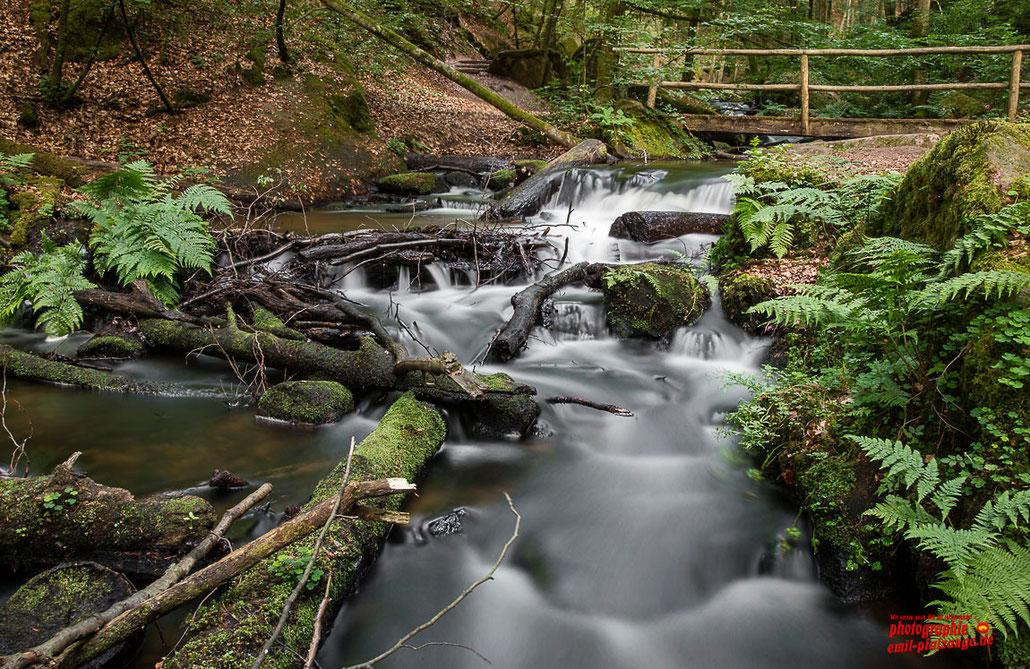 Naturerlebnisse im wildromantischen Karlstal bei Trippstadt Kreis Kaiserslautern - Diese und ein weiters Bild hängt als Leinwand in einer Ferienwohnung in Nesselwang im Allgäu