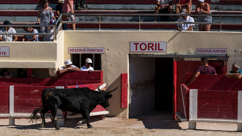 A round of Course Camarguaise lasts for about 15 minutes. The bull and the raseteurs get a break. After every round there is a new and fresh bull, the raseteurs stay the same and get tired over the afternoon.