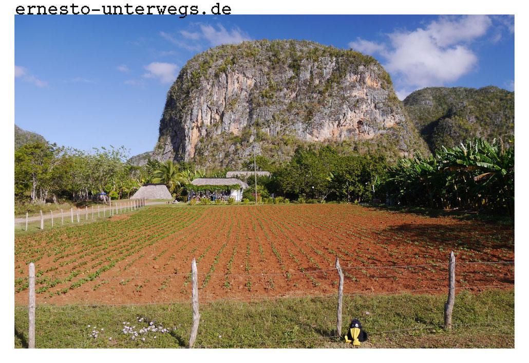 Eine kleine Farm in den Mongotes bei Viñales