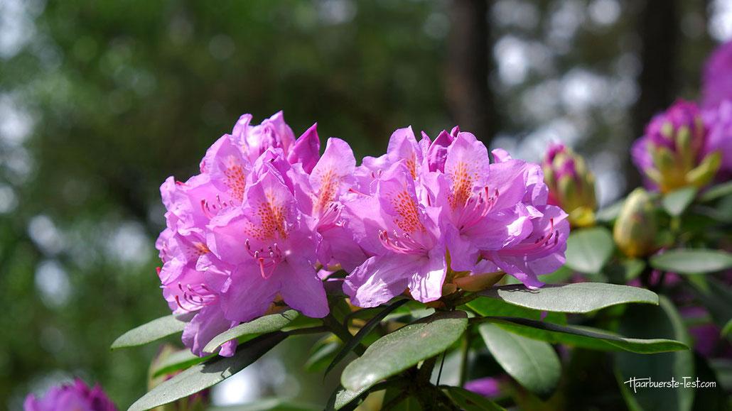 Blumen im Europapark