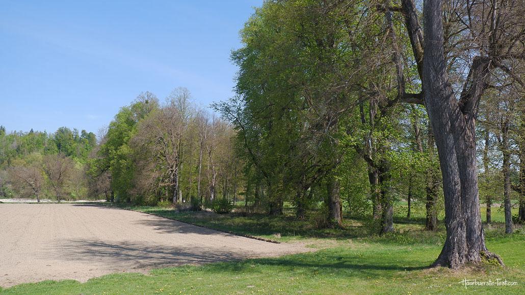 Rosegg (Kärnten)