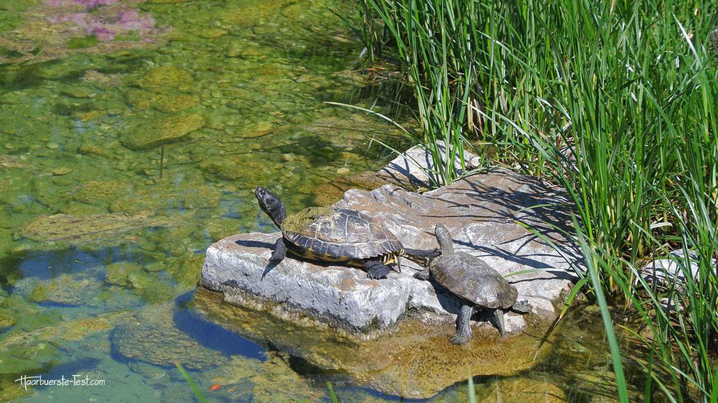 schildkröten in der sonne, schildkröte
