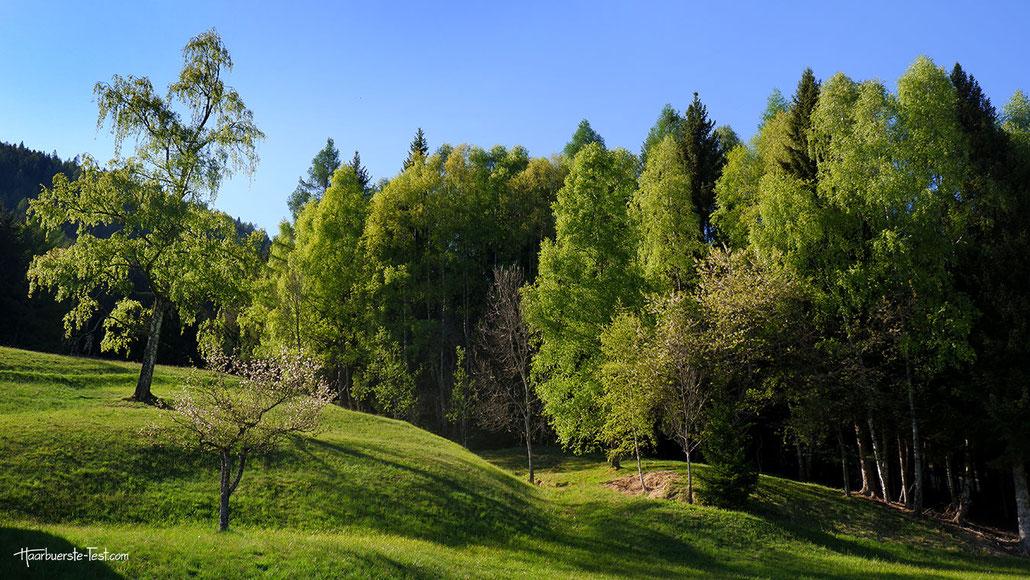 saftig grüne Almwiesen, arriach
