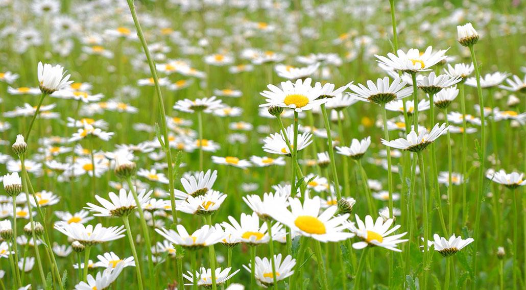Blumen, Blumenbeet