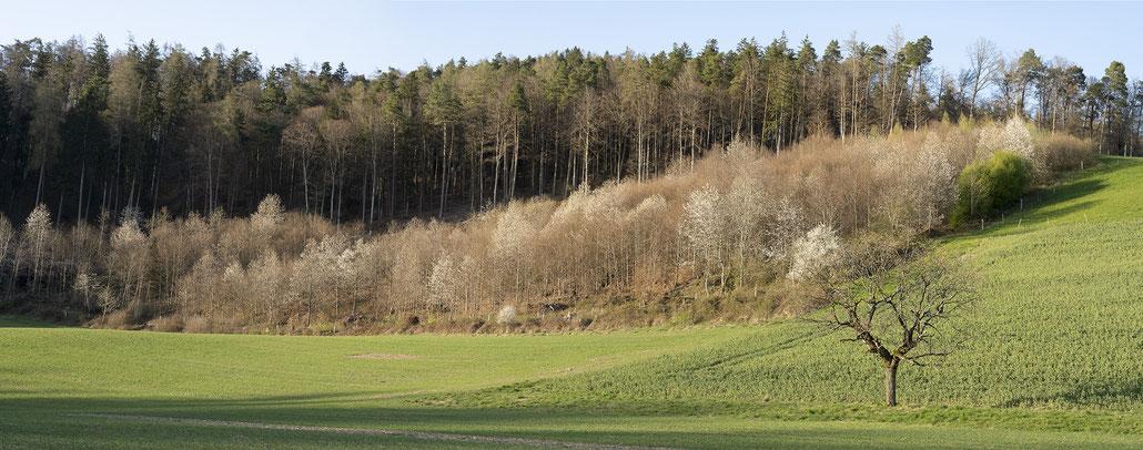 Frühling in Bolligen 3. April. Foto: Françoise Alsaker