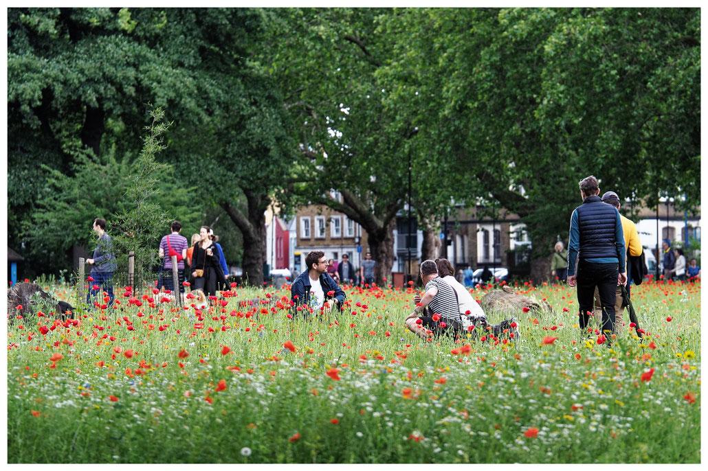 Menschen und Mohnblumen im Park London Fields