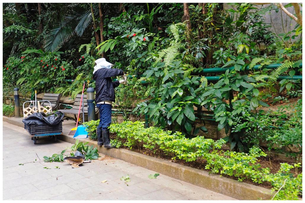 Hongkong - Botanischer Garten