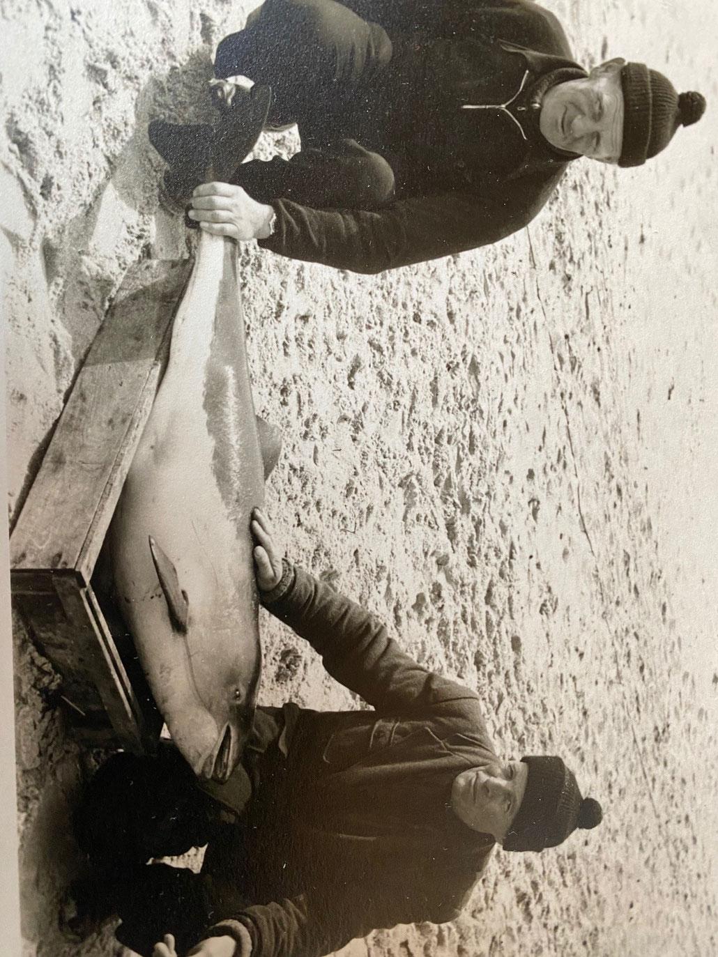 Julius Barkmann (links) und Otto Severin mit einem Tümmler (Schweinswaal)
