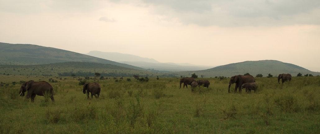 Elefantenherde auf dem weiten Grasland der Masai Mara