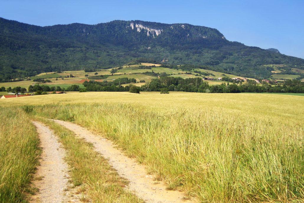Espace VTT Aude en Pyrénées - Plateau Puivert / Nébias