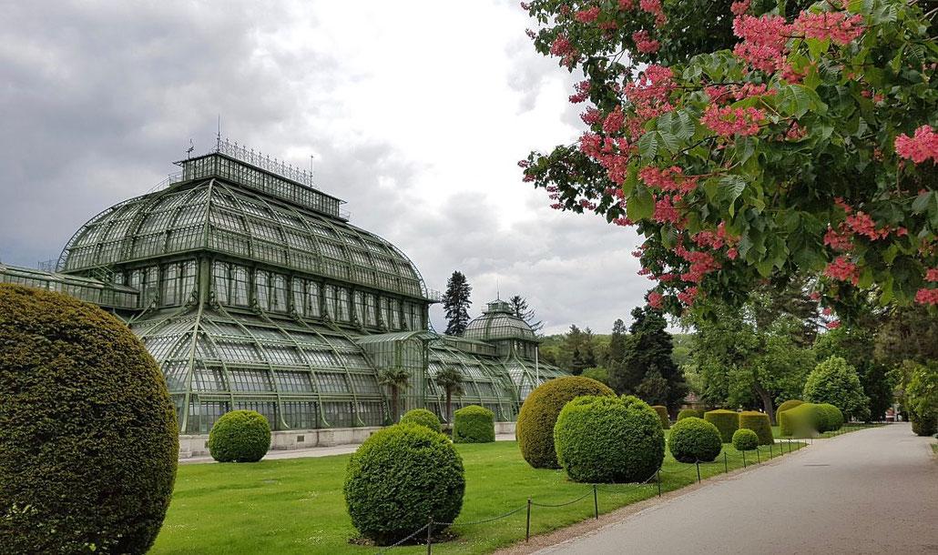 Das Palmenhaus in Schönbrunn in Wien ist alleine durch seine Architektur einen Besuch wert