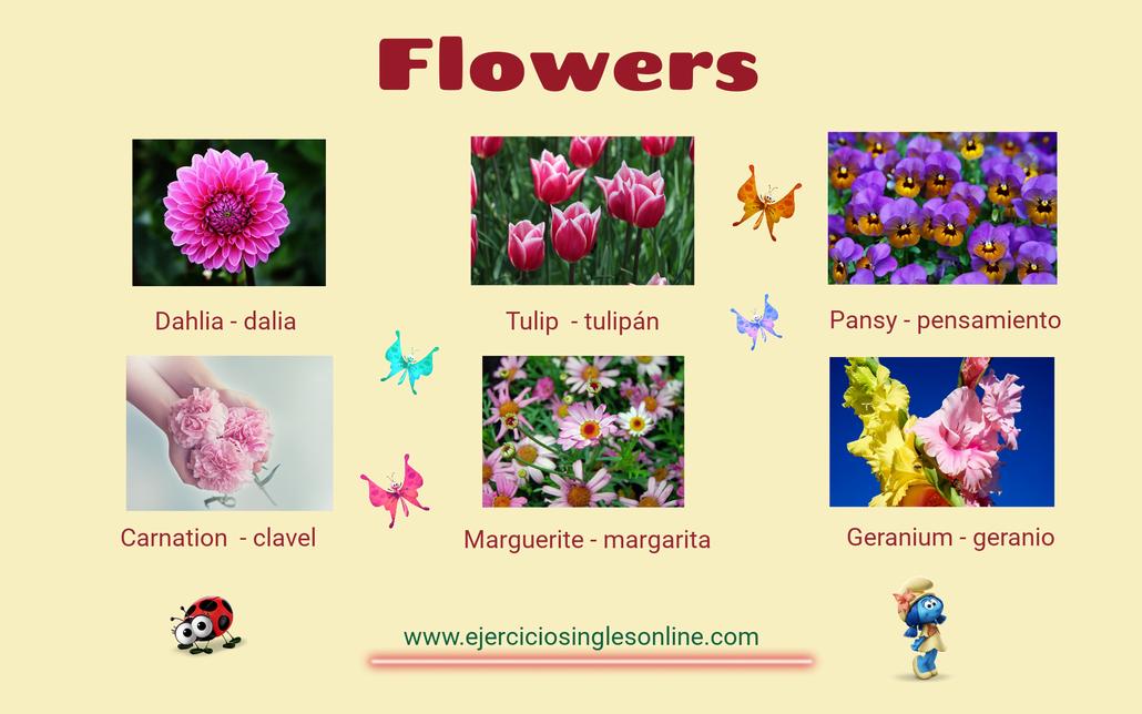 Flores en inglés.