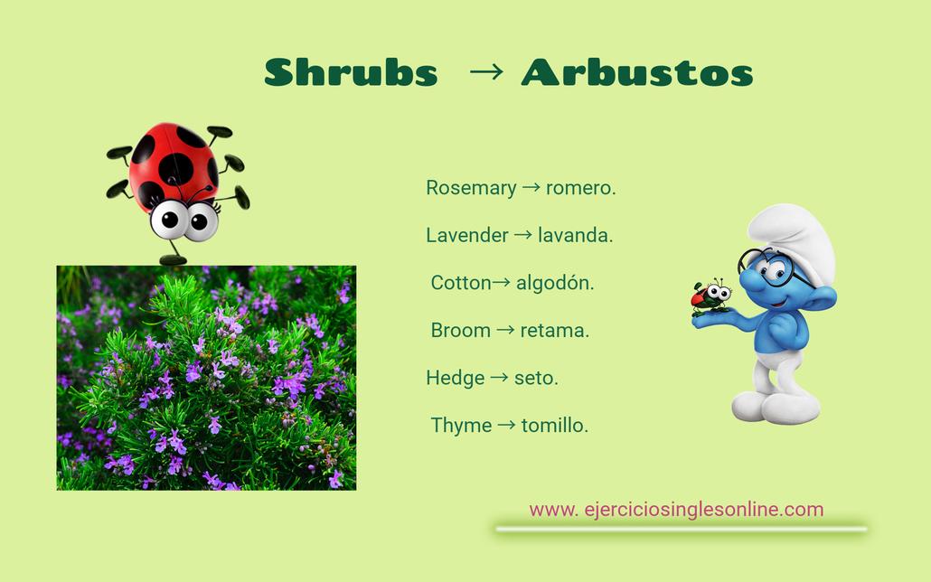 Arbustos en inglés.