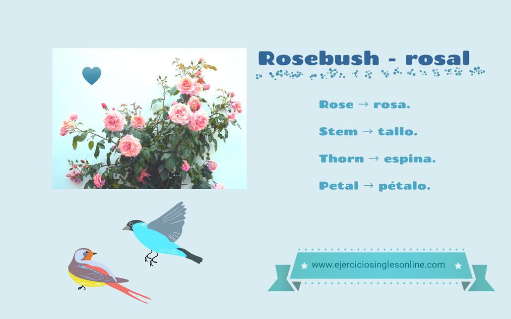 Rosal - vocabulario en ingles (Partes del Rosal)