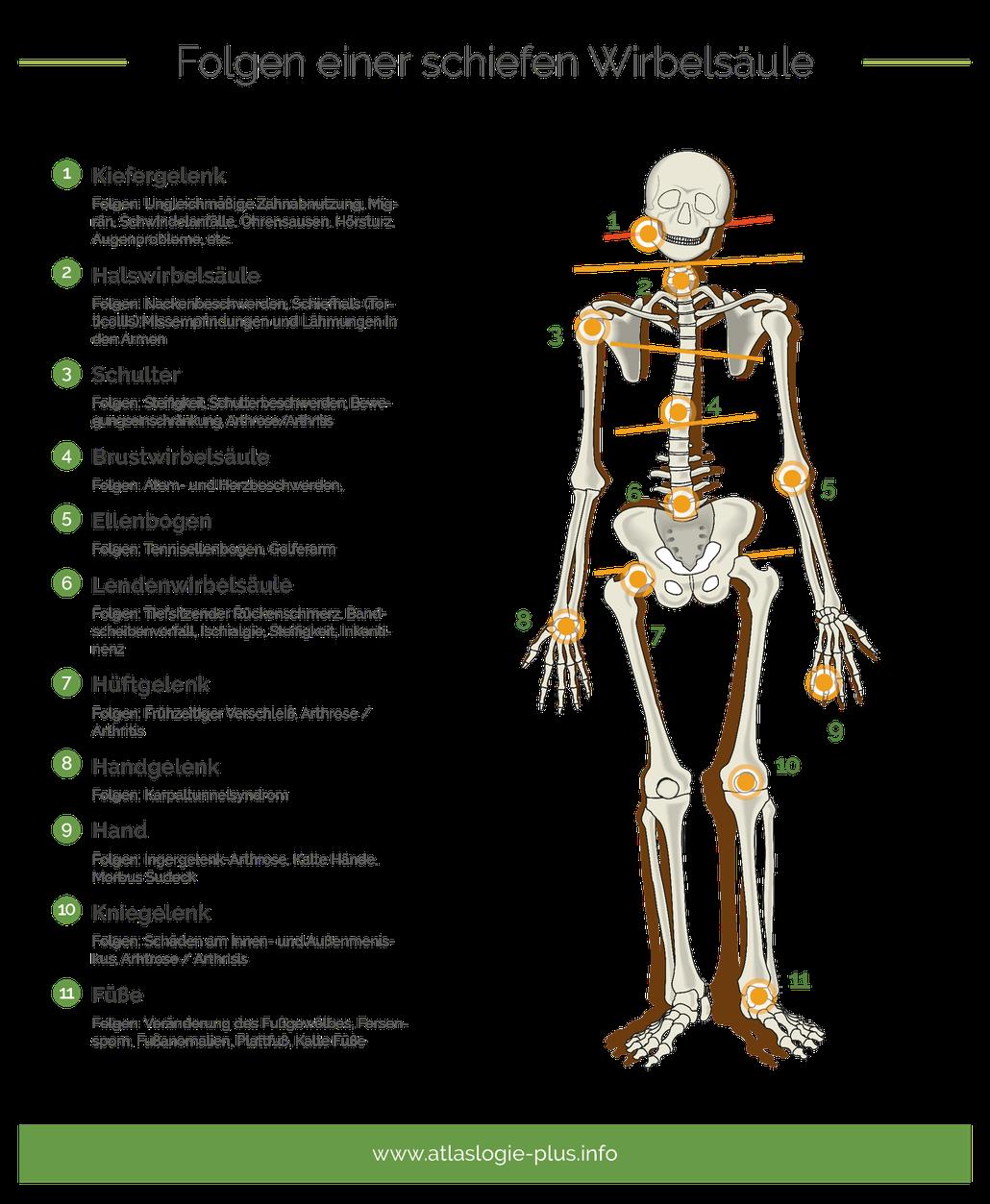 Ausgezeichnet Ellenbogen Oberflächenanatomie Ideen - Anatomie Von ...
