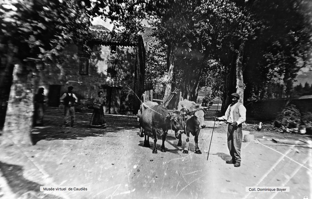 Attelage de boeufs sur la place de la Gendarmerie venant de la Promenade des Basses vers 1909