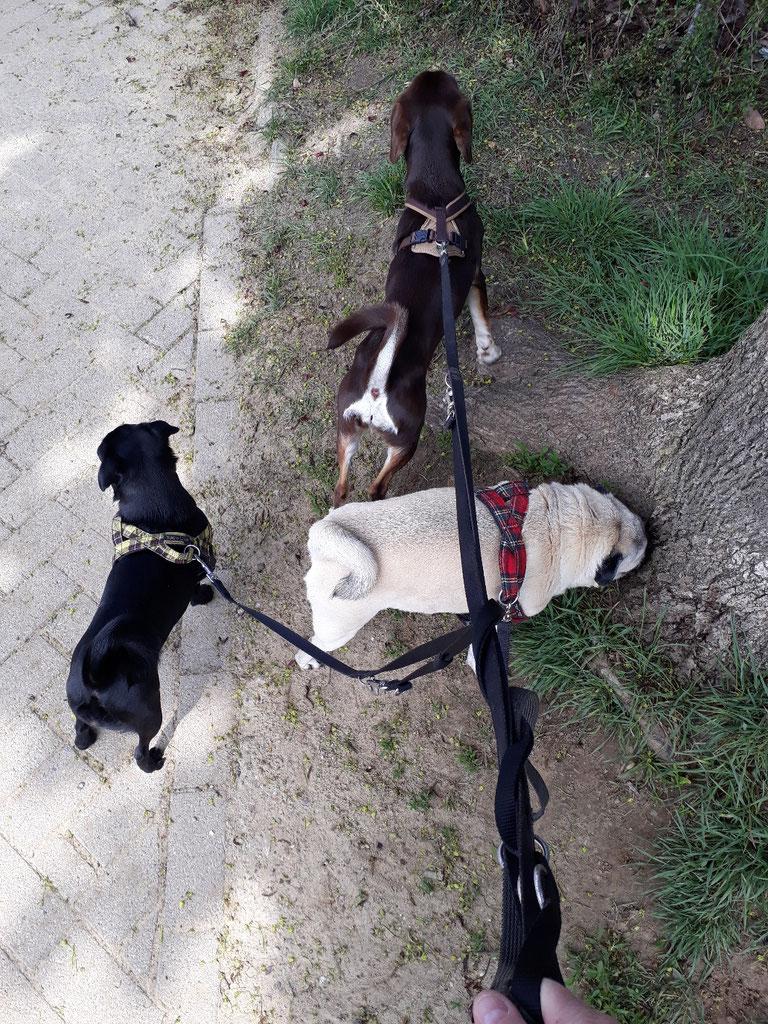 Bowdi, Emma und Trudi
