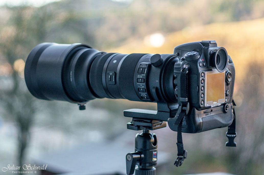Nikon, D800, Sigma 150-600mm Sport, Sigma, Wilhelma, Stuttgart, Sigma Sport, Stativ, Benro, Tiere