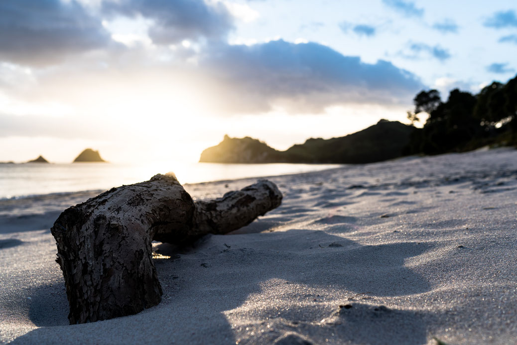 Log on the beach during sunrise at Hahei beach, Coromandel Peninsula, New Zealand