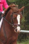 A 3 km du gîte :Le Domaine de Montmeyre (centre équestre) Cours d'équitation chevaux et poneys.  Balade chevaux à l'extérieur (1h : 17 €/pers.) Balade poneys en main (enfants de 3 à 9 ans). Labels : Ecole Française d'équitation Poney Club de France -