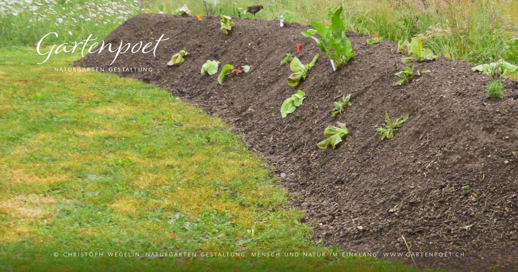 Gemüseanbau, Gemüsegarten, Gemüsebeet, Hügelbeet, Blumenbeet, Mischkulturen, Permakultur
