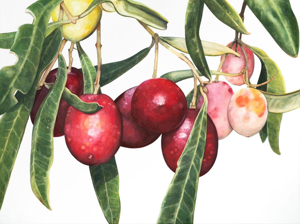 olea europaea, oleaceae, 120x90cm, 2021, oil in linen