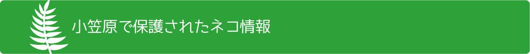 小笠原で保護されたネコ情報