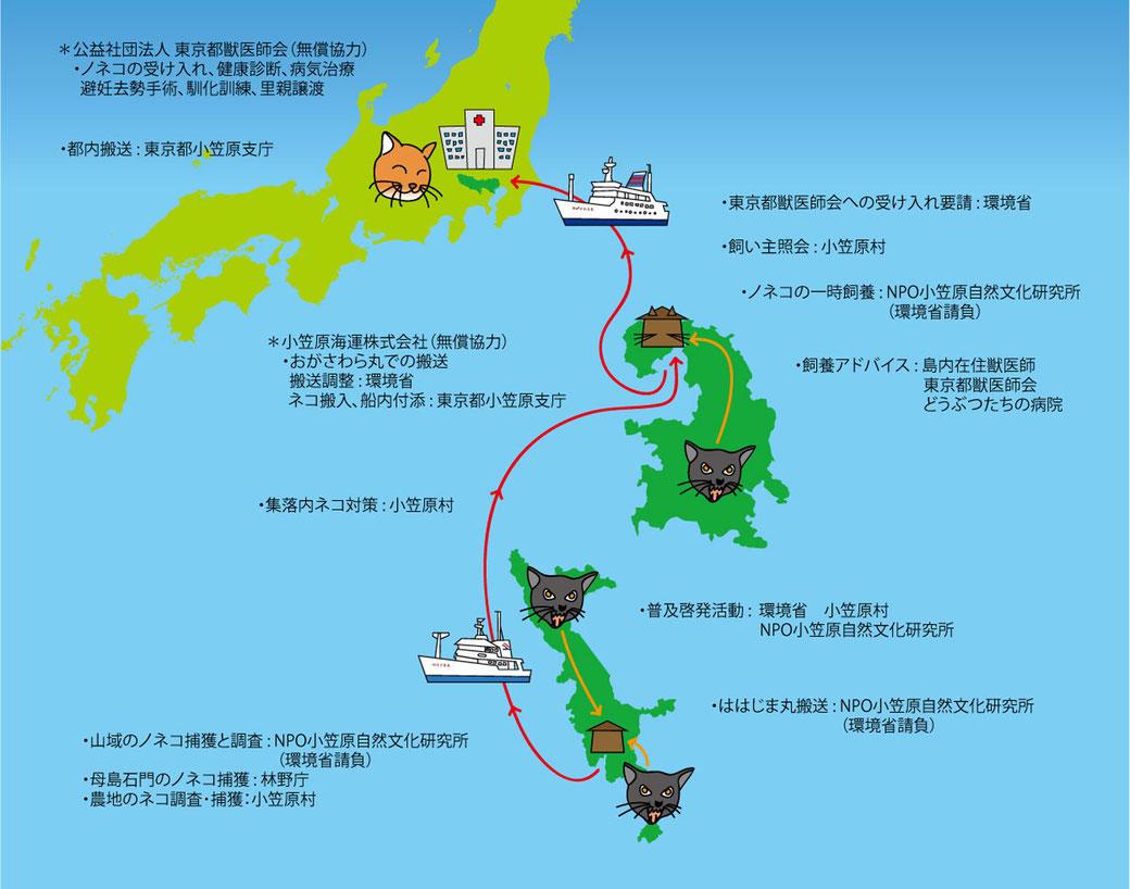 小笠原ネコプロジェクトの関係図