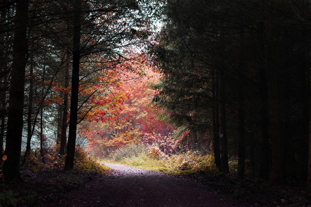 Ein einmalig farbenfrohes Spektakel im Koblenzer Stadtwald im späten Herbst 2016