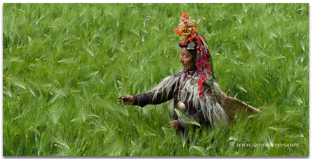 drokpa tribe woman brokpa culture traditional clothing