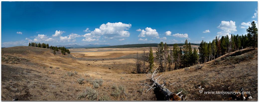 Panorama van Hayden Valley met beneden onze eerste bizons