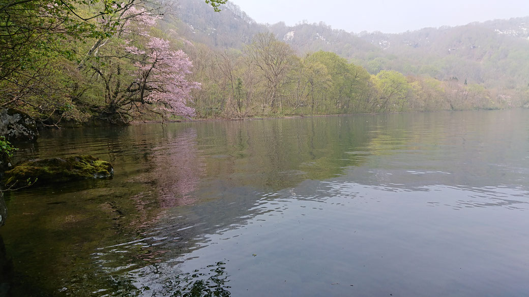 TOWADAKO in early May. Pink flower are wild cherry blossoms.