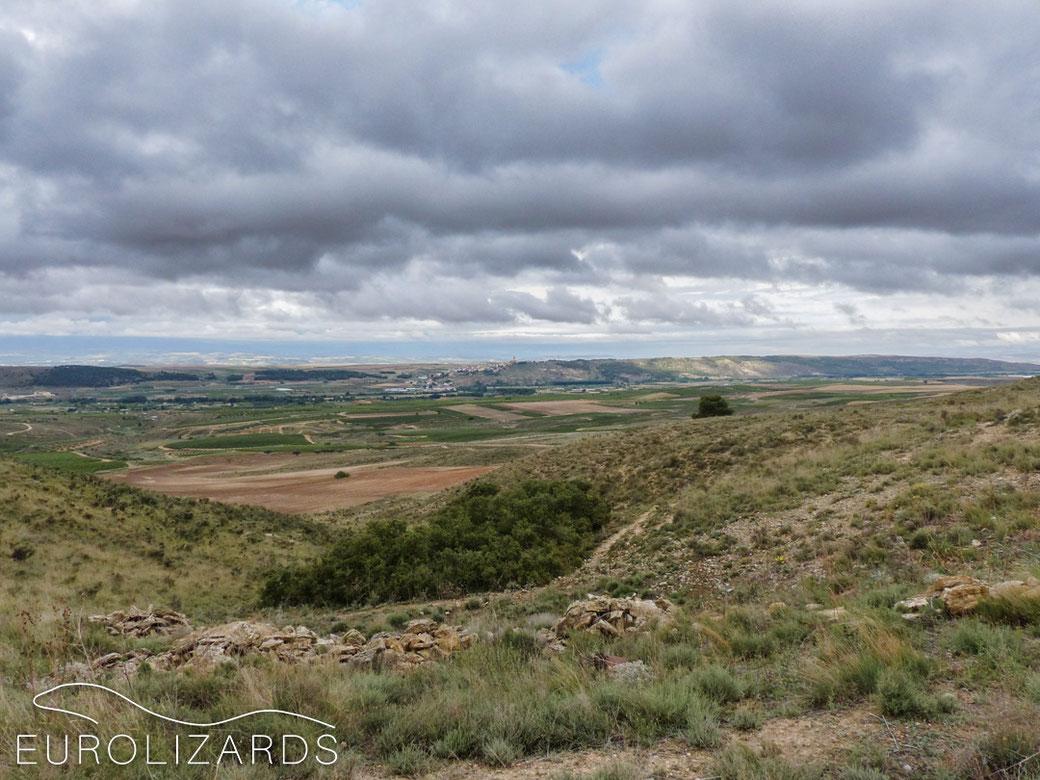Typical habitat of Psammodromus hispanicus at Andosilla (Navarra / Spain) with sparse, scattered vegetation