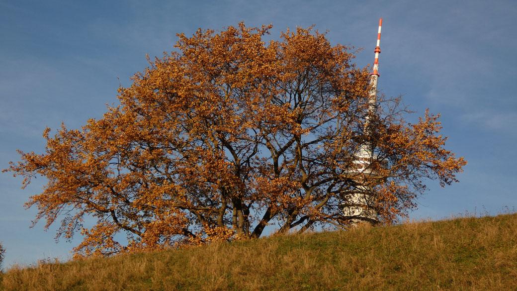 Der Olympiaturm versteckt sich in der wunderschönen Natur am Olympiapark München