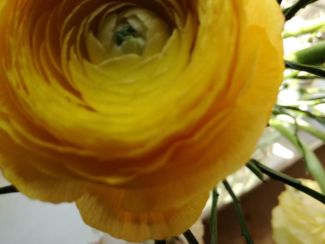 Die Sprache der Blumen, Bedeutung von Blumen, Blumen schenken, Blumengeschenk, Vergissmeinnicht