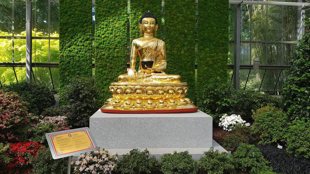Buddha of peace