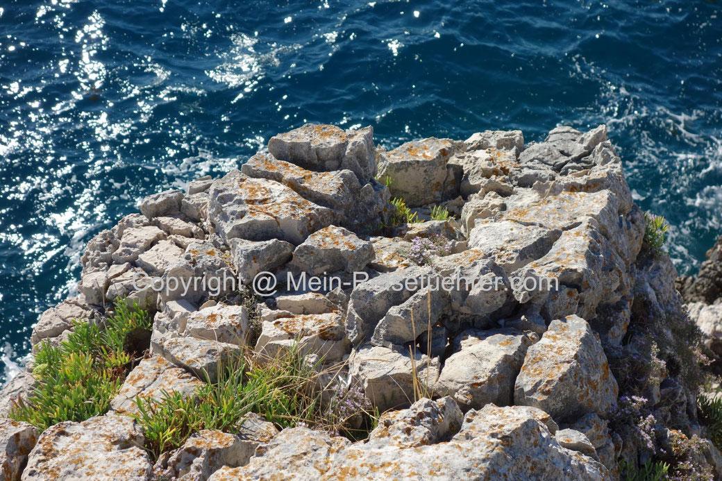 kroatien wunderschöne küste, kroatien pflanzenvielfalt, schönste kroatien pflanzen vegetation, beautiful croatia vegetation ocean beach flora;