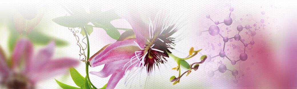 Laboratoire Om'Quantallya - complements alimentaires - touraine - val de loire - annuaire de therapeutes via energetica